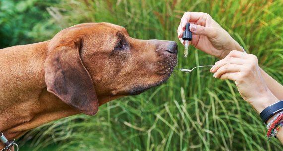 Jak dávkovat CBD olej pro psy