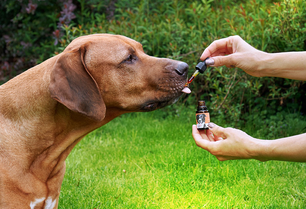Dávkování CBD oleje pro psy je individuální